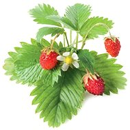 ClickAndGrow Forest Strawberry Refill Pack - Seedling planter