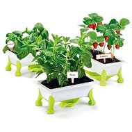 Educa My Little Garden - Strawberries, Mint, Basil - Experiment Kit