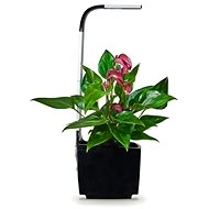 TREGREN T3 Kitchen Garden, Black - Smart flower pot