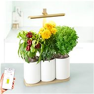 Pret a Pousser Lilo Edition - Smart Flower Pot